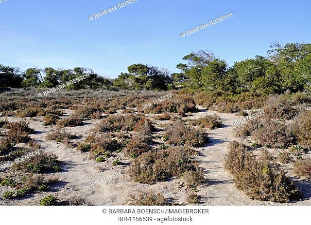 Parc regional de las Salinas, Salinas de San Pedro, Natural Park, San Pedro de Pinatar, Mar Menor, La Manga, Murcia, Spain, Europe