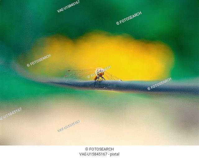 arthropod, insect, animal, dragonfly, bug, film