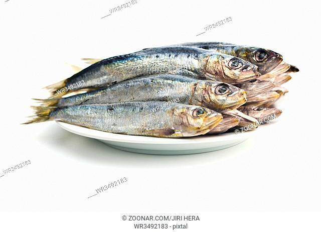 Raw sardines fish isolated on white background