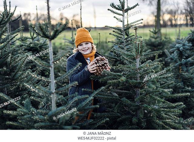 Little boy standing among fir trees, holding pine cone
