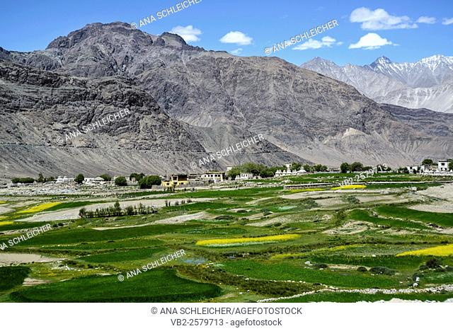 The village of Khalsar in Nubra Valley. Green patches show the few areas occupied by humans in these remote lands