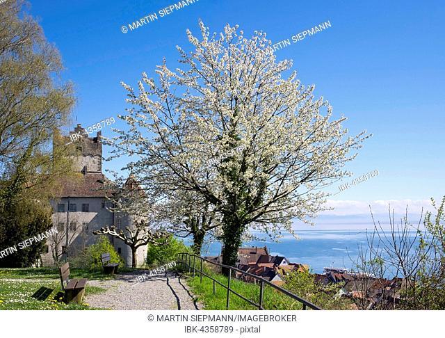 Meersburg castle with blooming cherry, Meersburg at Lake Constance, Lake Constance district, Upper Swabia, Swabia, Baden-Württemberg, Germany