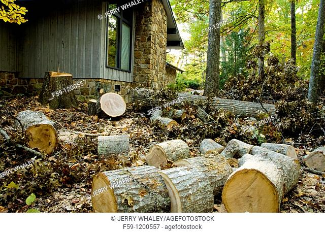 Oak Tree on the Ground, East Tennessee