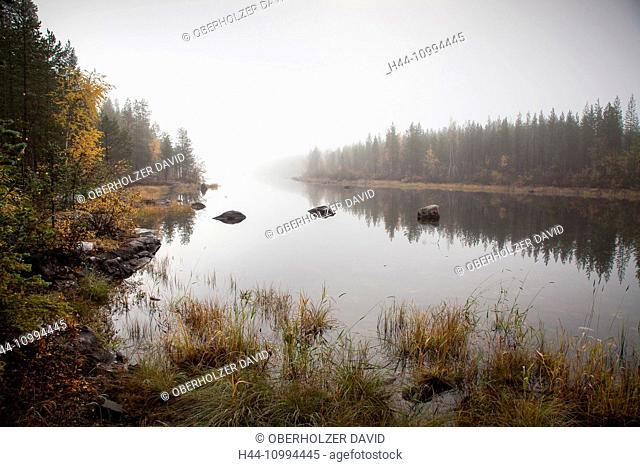 Europe, autumn, autumn colors, scenery, landscape, Lapland, Muddus, national park, fog, Swede, lake, Scandinavia, reflection, wood, forest, water
