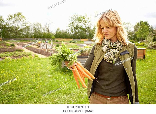 Mature woman outdoors, gardening, looking at bunch of carrots