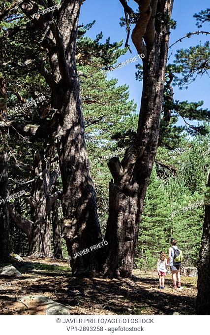 A couple - women and children - detained before one of the remarkable trees seen on the Path of the Forest Grandparents. Laguna Negra Natural Park and Glacier...