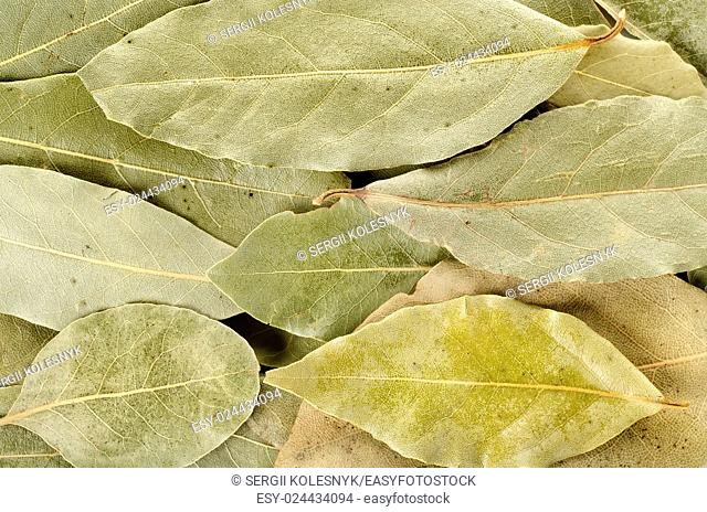 Arrangement of bay leaves in various shades of green