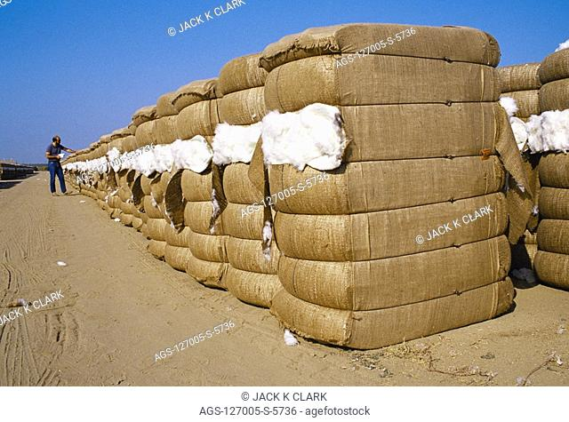 Agriculture - New bales of Acala cotton are inspected outside a gin / Kern County, California, USA