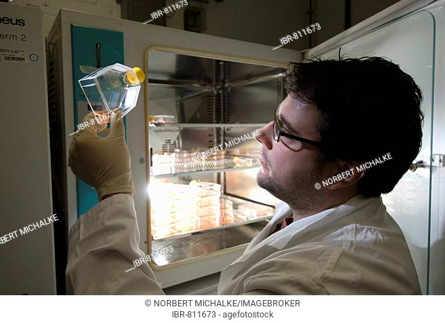 Stem cell research, Max Planck Institute for Molecular Genetics, laboratory technician at incubator with cells, Berlin, Germany