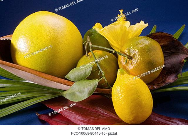 Studio shot of a variety of citrus fruit