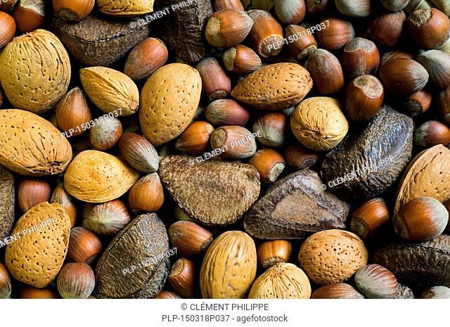 Mixture of dry nuts: hazelnuts, almonds, Brazil nuts, para nuts