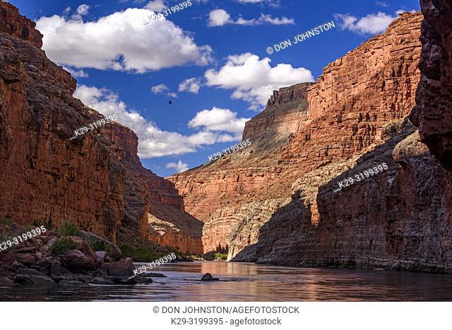 Grand Canyon walls reflected in the Colorado River, Grand Canyon National Park, Arizona, USA