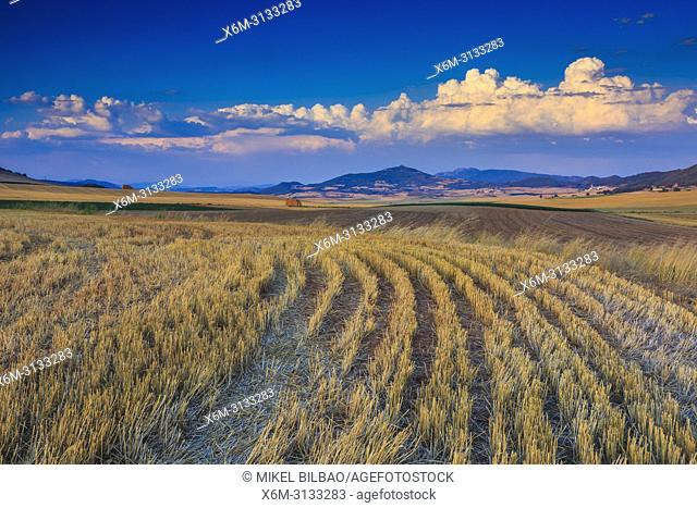 Farmland. Tierra Estella. Navarre, Spain, Europe