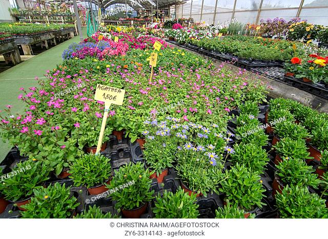MALLORCA, SPAIN - APRIL 10, 2019: Flowers and herbs in little pots inside greenhouse nursery on April 10, 2019 in Mallorca, Spain