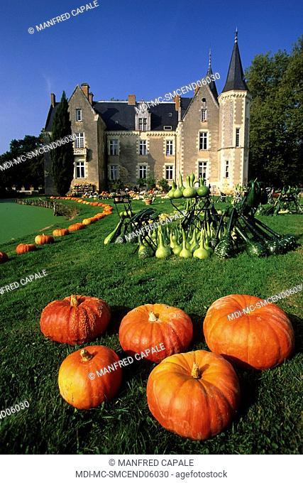 Feature - Cinderella's castle - Castle of Montriou - Maine-et-Loire - France