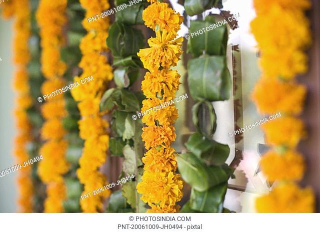 Close-up of flower garlands hanging on a door