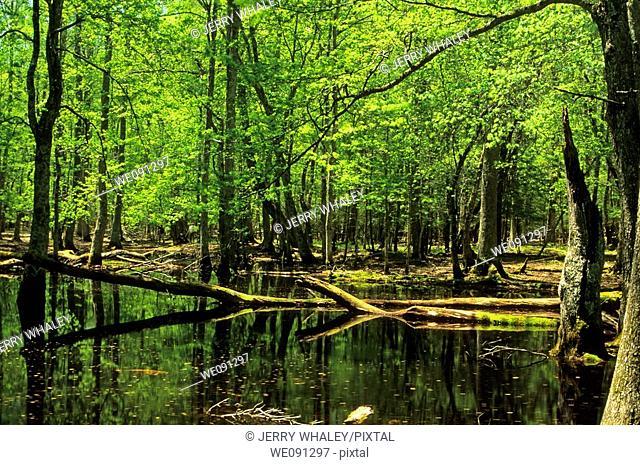 Gum Swamp, Spring, Cades Cove, Great Smoky Mtns National Park, TN, USA