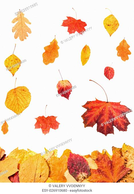 autumn season - collage from falling leaves isolated on white background