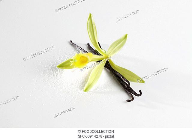 Vanilla blossom, vanilla pod and vanilla sugar