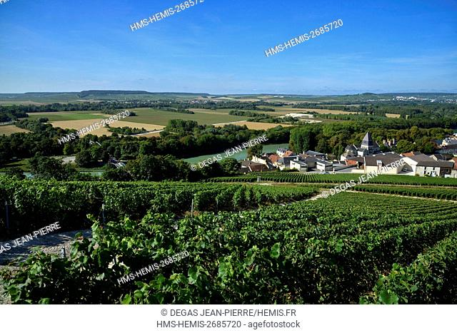 France, Marne, Mareuil sur Ay, Marne Valley, Champagne vineyard ranked Premler Cru and listed as World Heritage by UNESCO with a village in edge of the Marne...