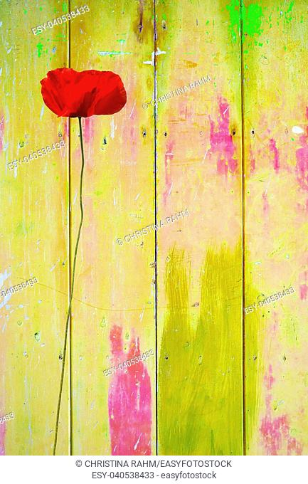 Red poppy on yellow colorful vintage background with shabby distressed grungy texture hippie style