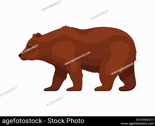 Grizzly bear side view. Isolated on white background. Vector flat illustration of a brown cartoon grizzly bear walking forward