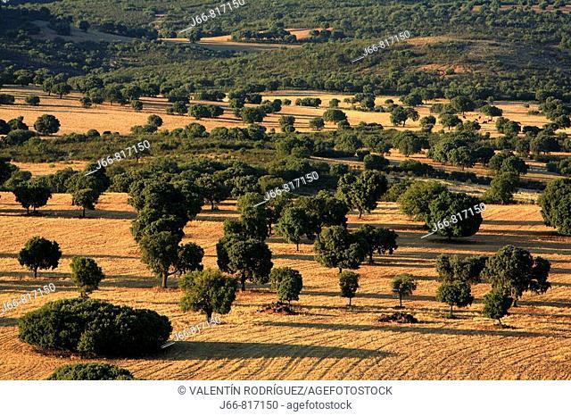Landscape, Cabañeros National Park. Castilla-La Mancha, Spain