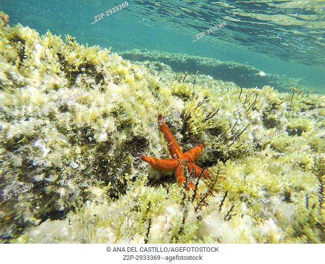 Starfish and Turquoise water in Minorca island Balearics Spain Underwater image