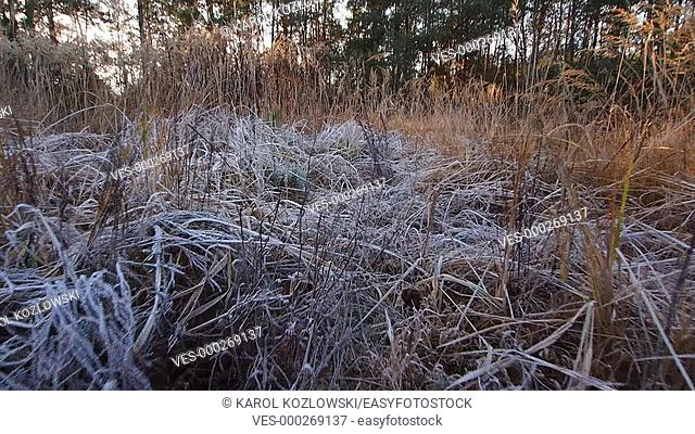 Morning Frost on the Field in Poland