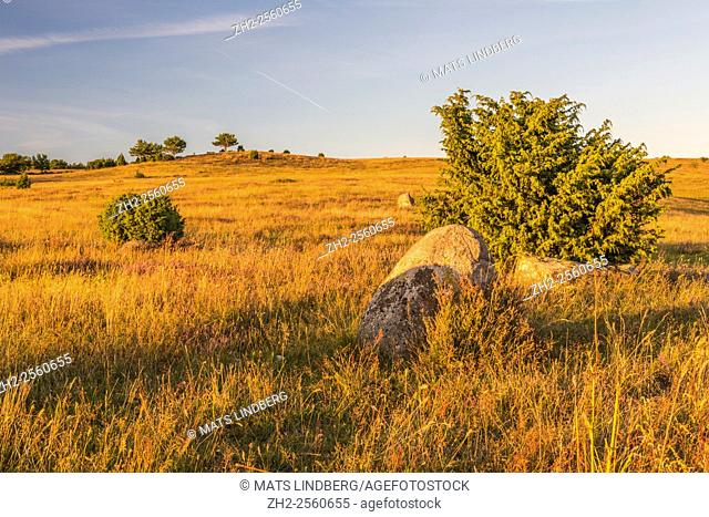 Brösarps backar in south of Sweden, with pine trees and juniper trees,