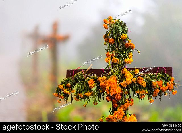 A row of flower-decorated wooden crosses is erected along the way to a cemetery during the Day of the Dead celebrations in Ayutla, Mexico, 2 November 2019