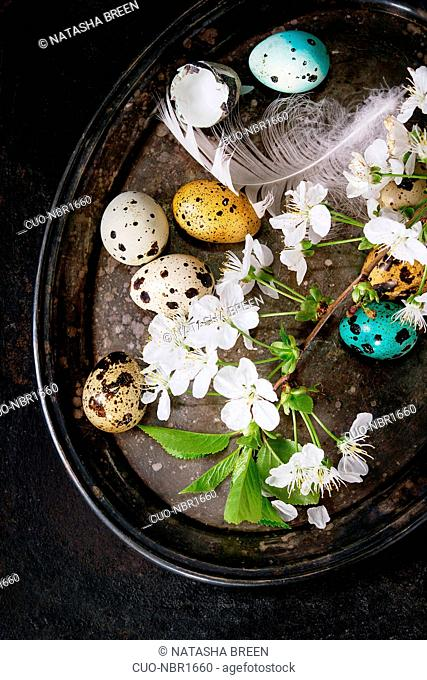 Decor colorful Easter quail eggs with spring cherry flowers, moss and bird feather on vintage metal tray over black texture background