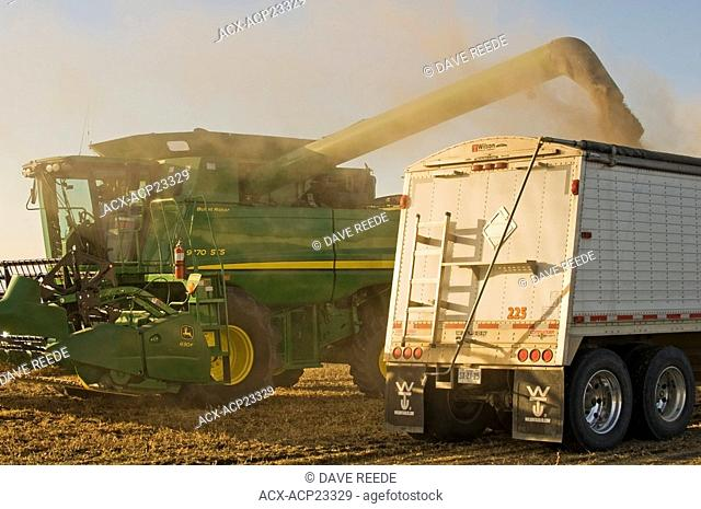 A combine harvester unloads soybeans into a grain truck during the harvest, La Salle, Manitoba, Canada