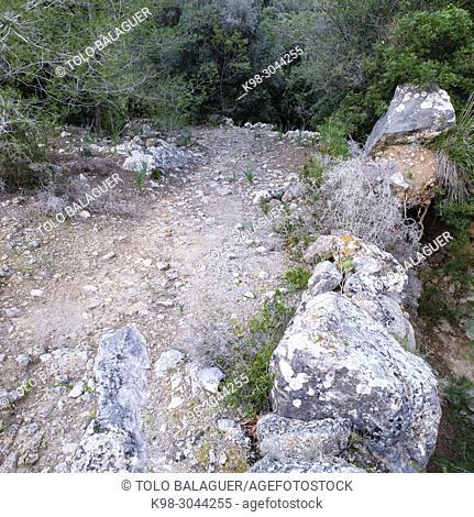 Cami Reial, camino viejo de Puigpunyent, Estellencs, Serra de Tramuntana, Mallorca, balearic islands, Spain