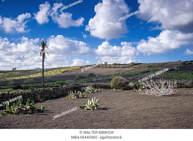 Spain, Canary Islands, Lanzarote, El Capitan, north Lanzarote landscape