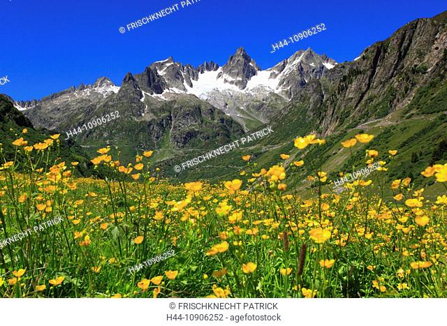 Alps, mountain, mountain panorama, mountains, mountain flora, mountain spring, mountain panorama, flower meadow, flora, spring, Fünffingerstöck, mountains