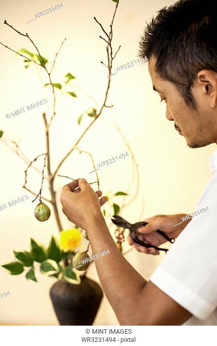 Japanese man working in a flower gallery, working on Ikebana arrangement, using secateurs