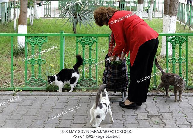 Tashkent, Uzbekistan - May 08, 2017: Old Uzbek woman feeding food to the street cats in the morning