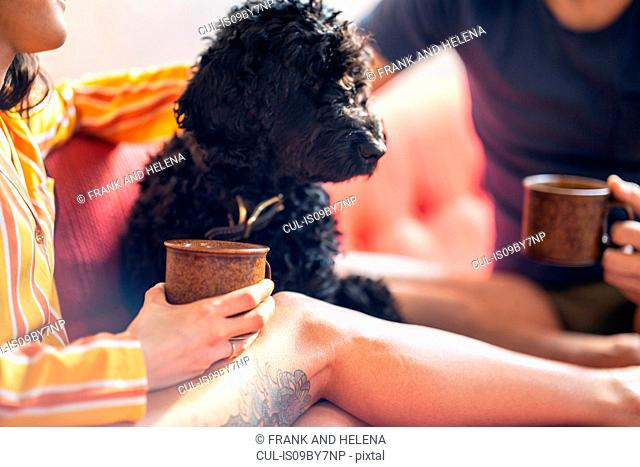 Hipster couple having coffee with pet dog on sofa