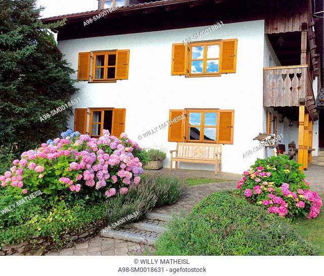 Garden with hydrangea plants in front of facade of an old traditional Bavarian farmhouse with wooden windows and shutters, Bavaria, Germany, Europe
