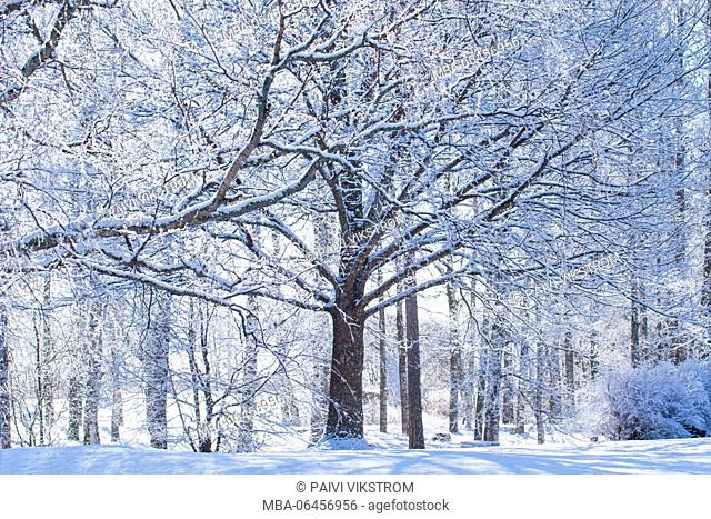 Snow on the branches of trees