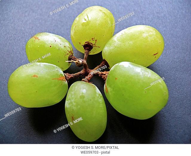 Grapes (Vitis) species: voinierianum - Vitis vinifera. The Classic Berry. Pune, Maharashtra, India