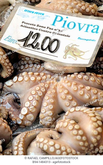 Octopus at the fish market on the Campo della Pescheria, Venice, Veneto, Italy