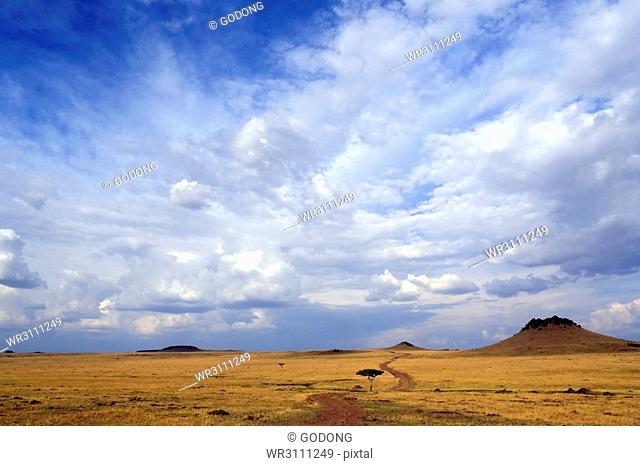 African savanna, golden plains against blue sky with clouds, Masai Mara Game Reserve, Kenya, East Africa, Africa