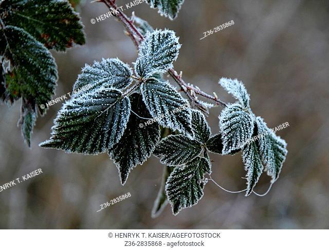Winter in Wysowa Village, Poland