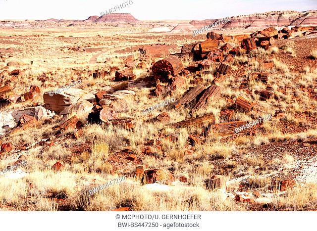 parts of petrified logs in desert landscape, USA, Arizona, Petrified Forest National Park
