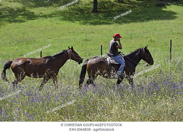 rider and horses in the country side near Amareleja, Alentejo region, Portugal, southwertern Europe