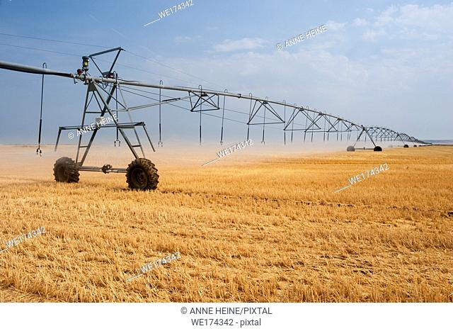 Large irrigation sprinkler watering a crop field in Southern Alberta prairie