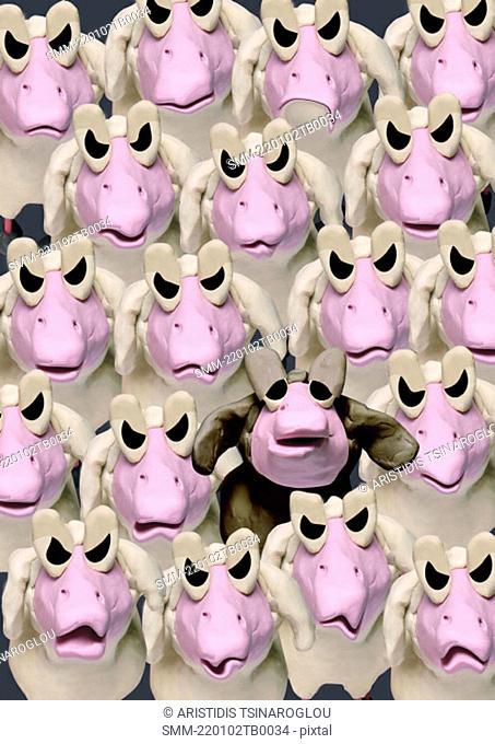 Group of angry sheep and one black sheep