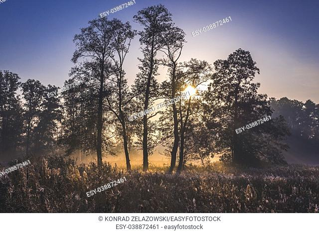 Sunrise in Gorki village, Sochaczew County on the edge of Kampinos Forest, large forests complex in Masovian Voivodeship of Poland